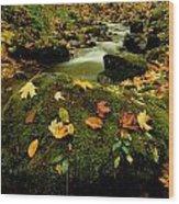 Autumn View Shows Fallen Leaves Wood Print