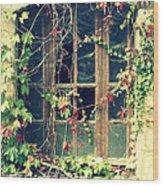 Autumn Vines Across A Window Wood Print