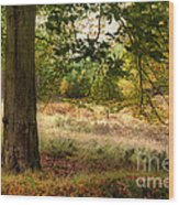 Autumn Woodland Wood Print