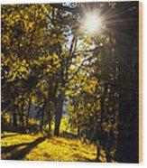 Autumnal Morning Wood Print