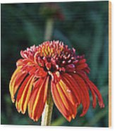 Autumn's Cone Flower Wood Print