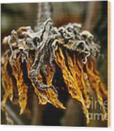 Autumn's Gold Wood Print