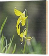 Avalanche Lily Wood Print
