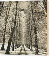 Avenue Of Trees Wood Print
