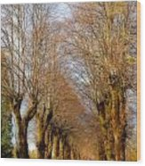 Avenue Of Trees Wood Print