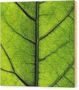Avocado Leaf 2 Wood Print