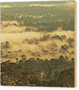 Awakening Forest Wood Print