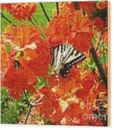 Azalea And Butterfly 1 Wood Print