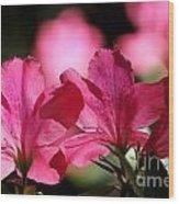Azalea Blossoms Wood Print