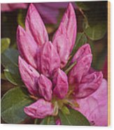 Azalea Cluster Wood Print by Michael Putnam