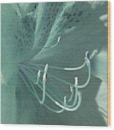 Azalea Hue1 Wood Print
