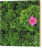 Azalea On Boxwoods Wood Print
