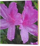 Azalea's In Spring Rain #1 Wood Print