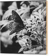 B N W Butterfly Wood Print