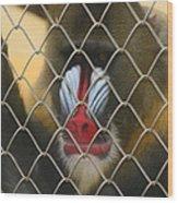 Baboon Behind Bars Wood Print