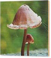 Baby And Parent Mushroom Wood Print