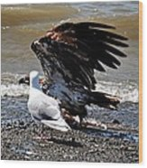 Baby Bald Eagle Movement Wood Print