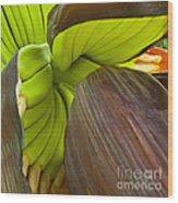 Baby Bananas Wood Print