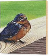 Baby Barn Swallow Wood Print by Peggy Dreher