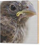 Baby Bird 3 Wood Print by Jessica Velasco