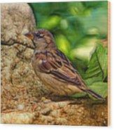 Baby Birdie Wood Print