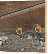 Baby Birds  Picture Wood Print by Preda Bianca