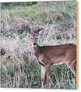 Baby Deer At Viera Wood Print