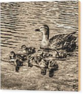 Baby Ducks - Sepia Wood Print