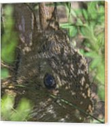 Baby Eastern Cottontail Rabbit Dmam011 Wood Print