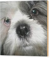 Baby Face Dog Wood Print by Sherry Hunter