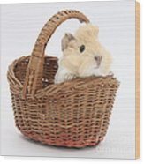 Baby Guinea Pig In A Wicker Basket Wood Print