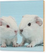 Baby Guinea Pigs Wood Print