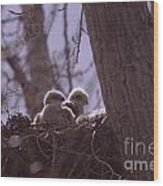 Baby Hawks Wood Print