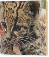 Baby Jaguar Wood Print