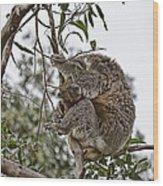 Baby Koala Wood Print