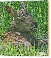 Baby Moose Wood Print