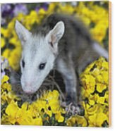 Baby Opossum In Flowers Wood Print