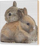 Baby Rabbits Wood Print