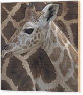 Baby Rothschild Giraffe  Wood Print