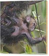 Baby Sak-monkey Wood Print