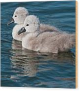 Baby Swans Wood Print