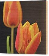 Baby Tulips Close Up Macro Wood Print