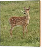 Baby Whitetail Fawn In A Spring Meadow Wood Print