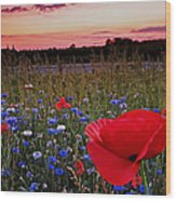 Bachelor Buttons And Poppies Wood Print