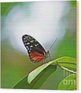 Backlit Butterfly Wood Print