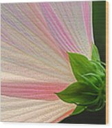 Backlit Mallow Wood Print