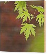 Backlit Maple Leaves On A Branch Wood Print by Greg Dale