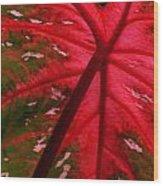 Backlit Red Leaf Wood Print