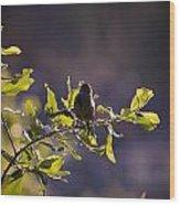 Backlit Song Wood Print