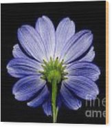 Backside Of A Blue Flower Wood Print
